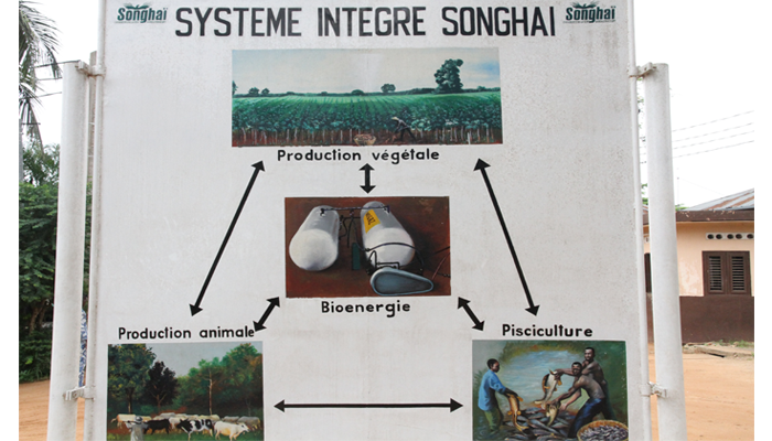 Depuis 1985, l'ONG Songhaï propose un modèle de développement agricole basé sur la valorisation complète du cycle de production et de transformation de la production agroalimentaire.