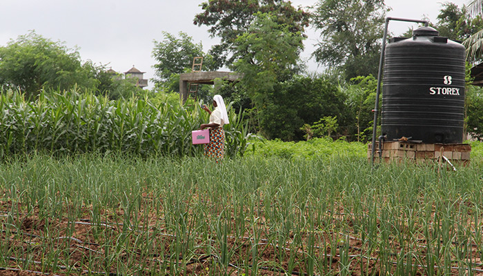The operation at the Songhai Center in Porto Novo is based on a complete agricultural cycle, with a variety of vegetables (soybean, cassava, corn, tomatoes, rice, etc.), seasonal and off-season crops being grown throughout the year.