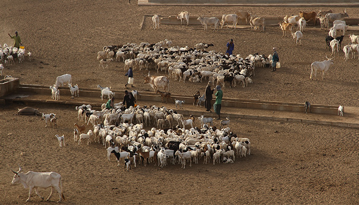 In rural areas of Senegal, farmers often have no way to stock or cool their milk, leading to significant loss of income.